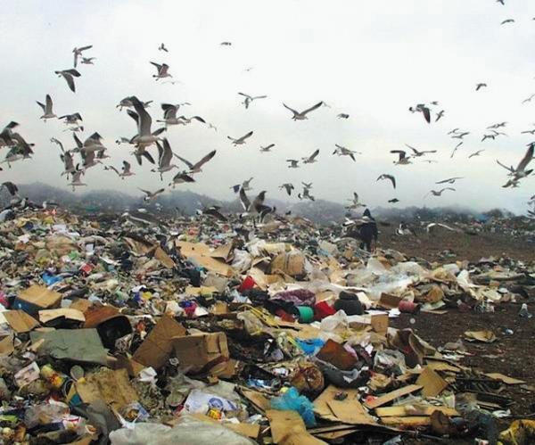 Реферат экологические проблемы нижегородской области 3497