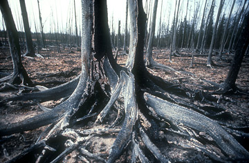 Экология Урала